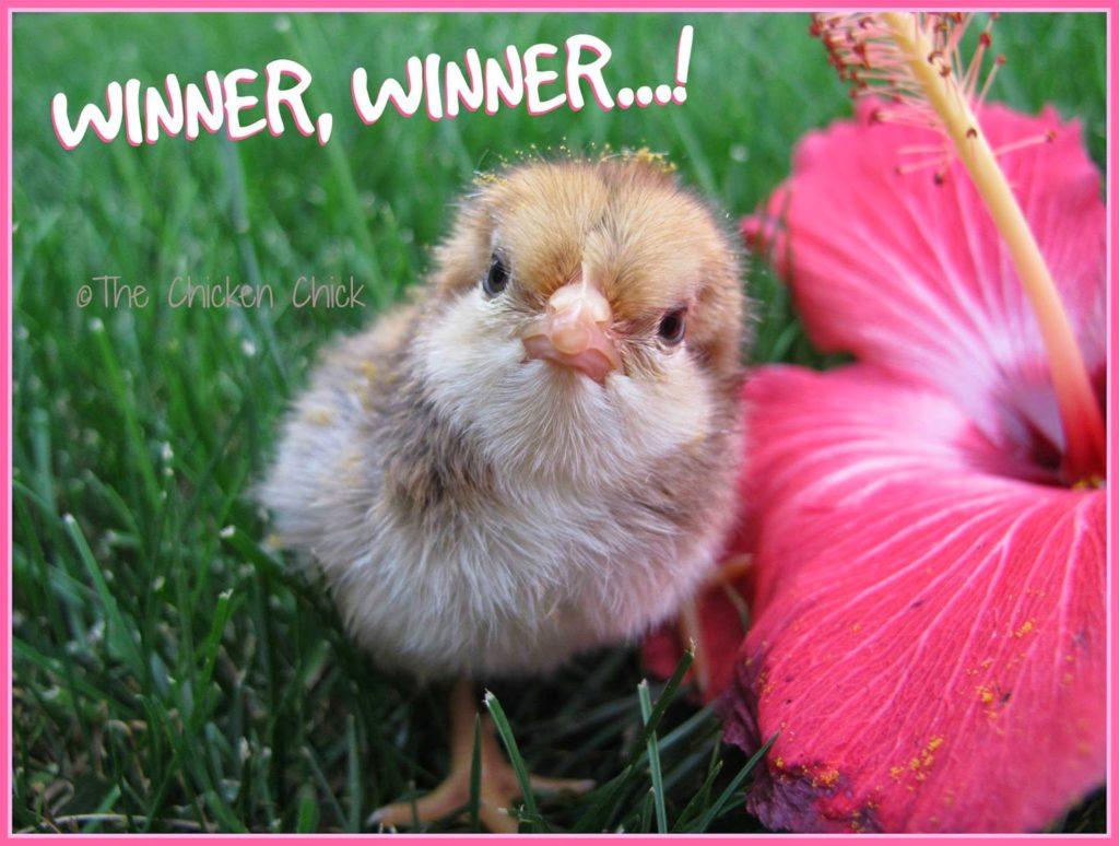Winner, WINNER!
