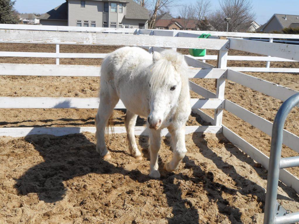 http://stretchingittotravel.wordpress.com/2014/04/15/baby-animals-at-the-critter-barn/