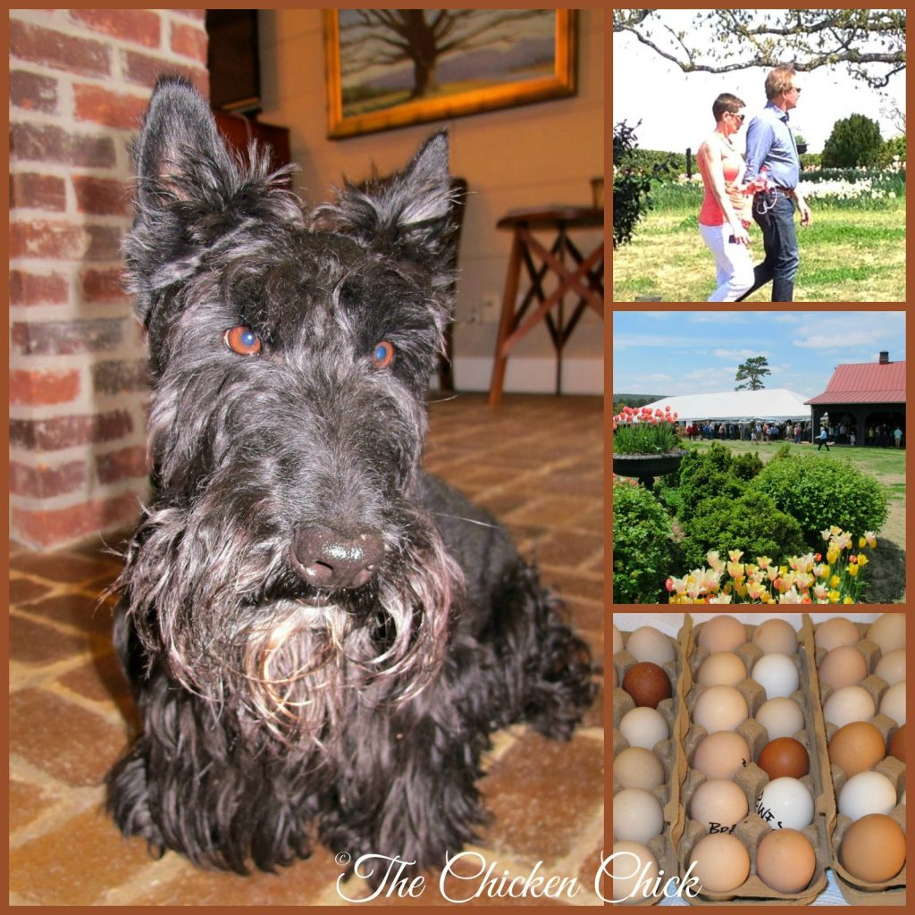 P Allen Smith with Kathy Shea Mormino, one of Allen's dogs and hatching eggs.