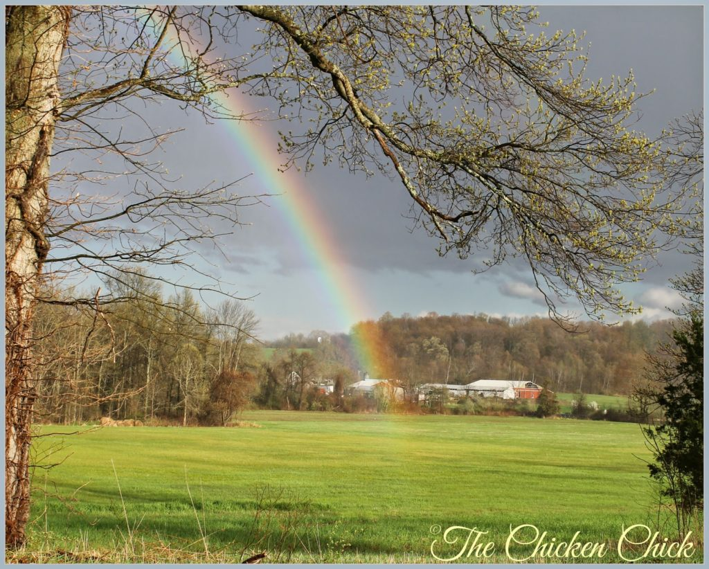 Rainbow after a spring shower