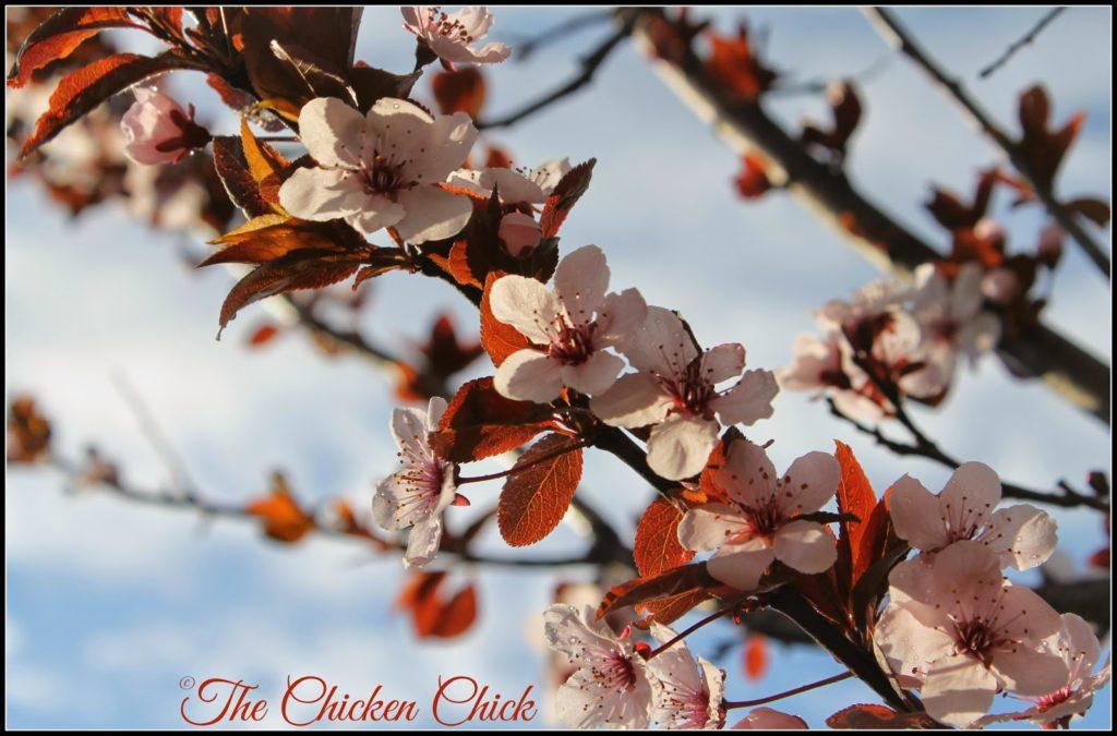 Spring brings ushers in change and new flock members as we say goodbye to Spartacus.