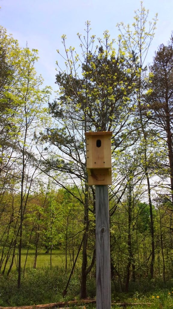 Eastern Bluebird House, shared by Halfway Oak Farm
