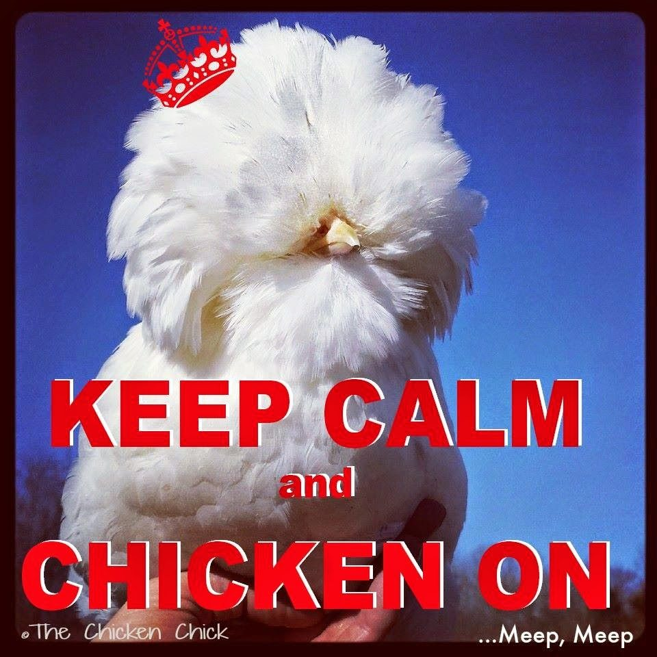 Keep Calm and chicken ON!