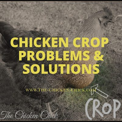 Chicken Crop problems & solutions