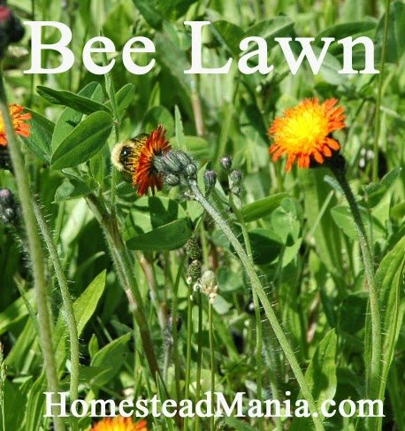 The Bee Lawn: Letting Nature Take its Course, shared by Homestead Mania