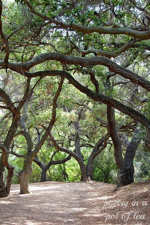 Oak Canyon, shared by Poetry in a Pot of Tea