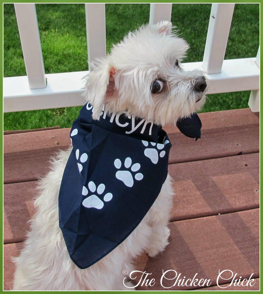 Molly, modeling Vetericyn bandana