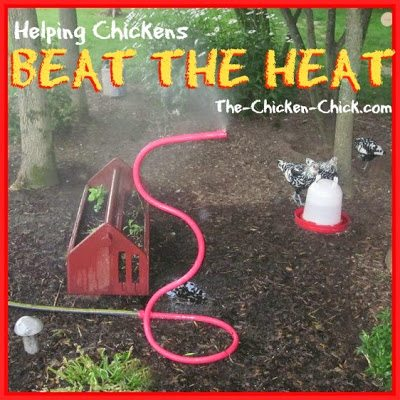 For MUCH more information about how to help chickens beat the heat, check out this article on my blog!