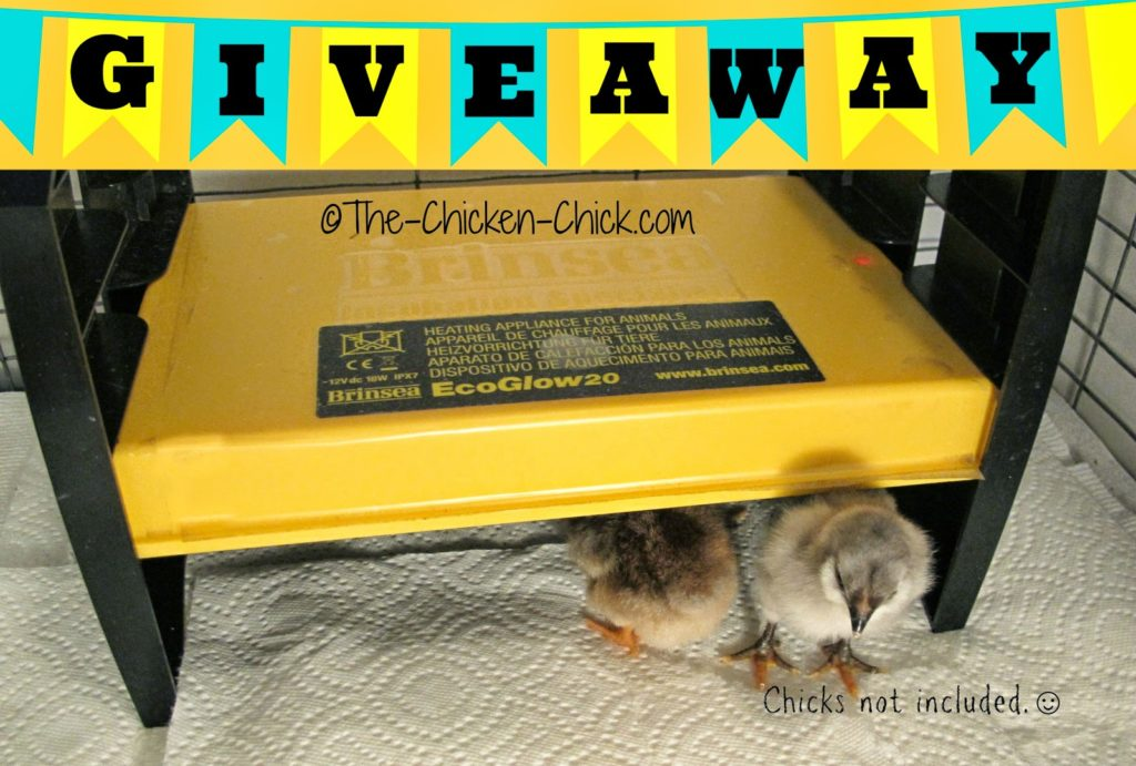 Brinsea EcoGlow 20 Brooder Giveaway at www.The-Chicken-Chick.com