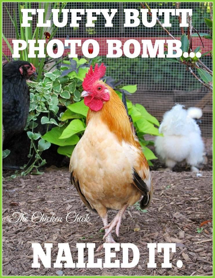 Fluffy butt photo bomb: Nailed It.