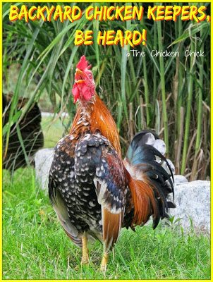 Backyard Chicken Keepers, Be Heard!