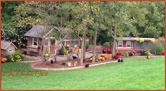 Our chicken yard.