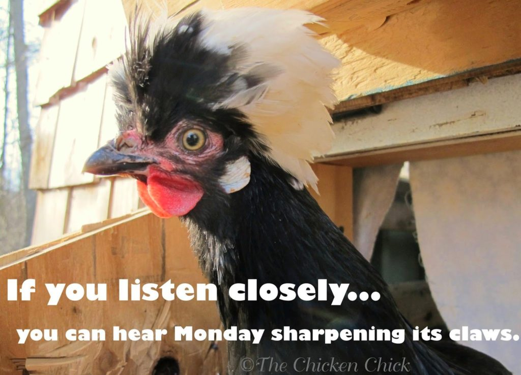 If you listen closely, you can hear Monday sharpening its claws.