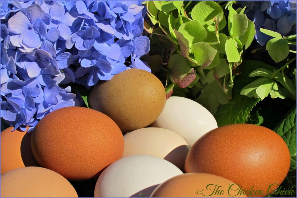 Fresh eggs from pampered pets.