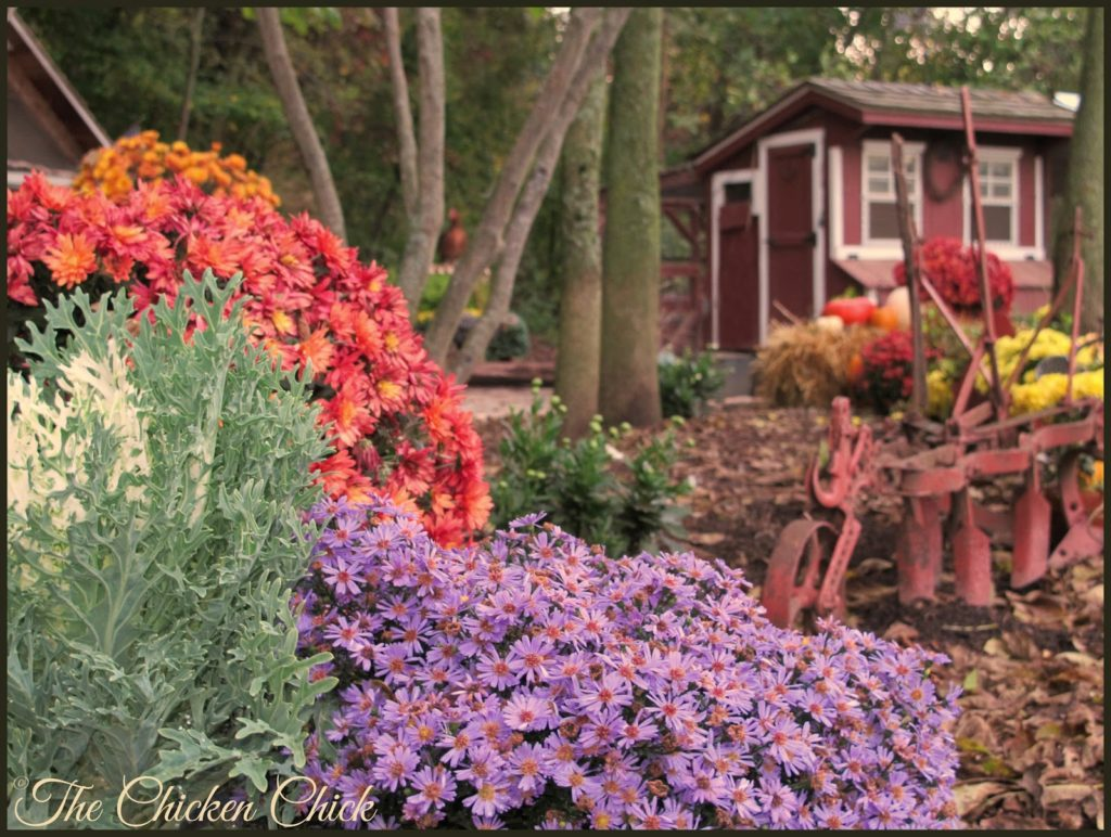 Autumn Chicken Yard