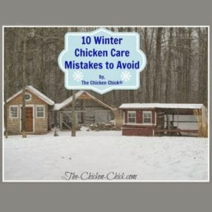 10 Winter Chicken Care Mistakes to Avoid