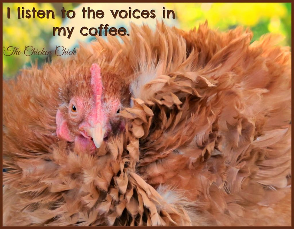 I listen to the voices in my coffee.