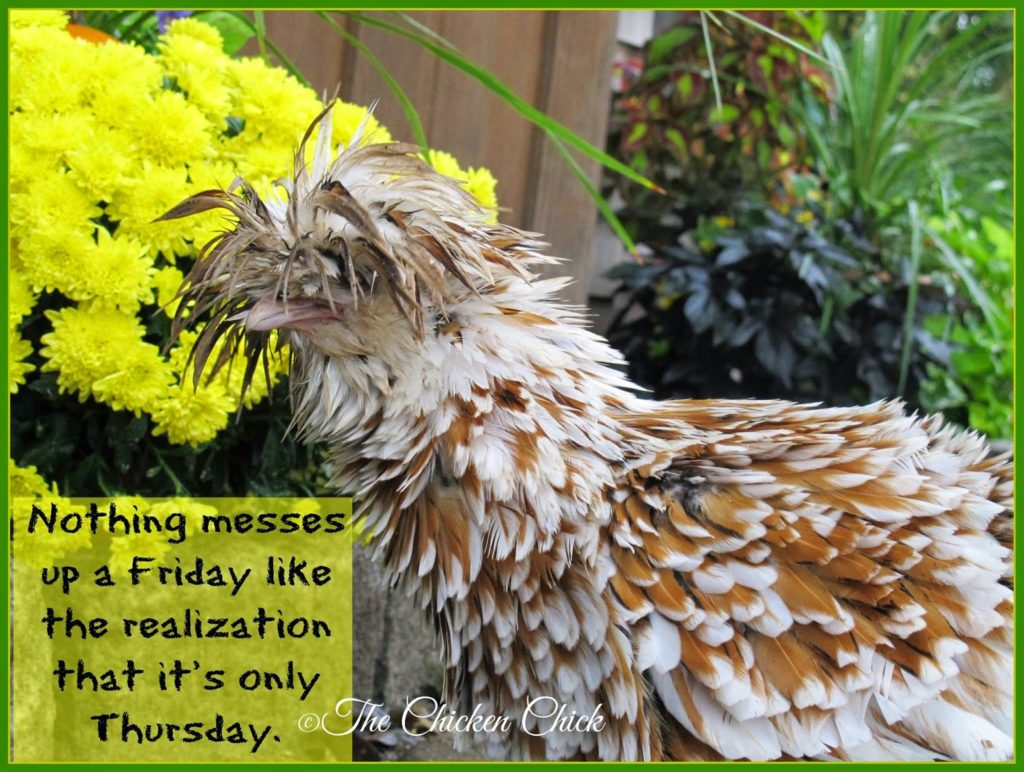 Nothing messes up a Friday like the realization that it's only Thursday.