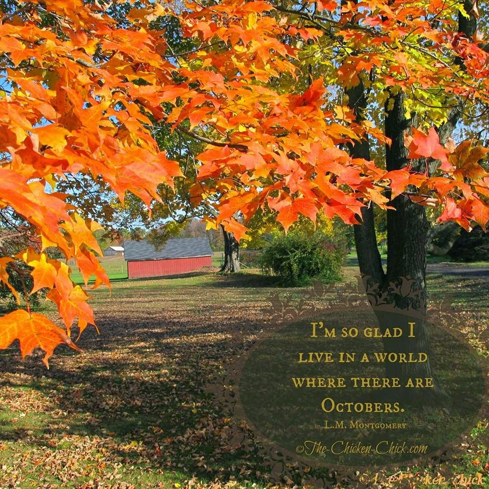 I'm so glad I live in a world where there are Octobers. ~L.M. Montgomery
