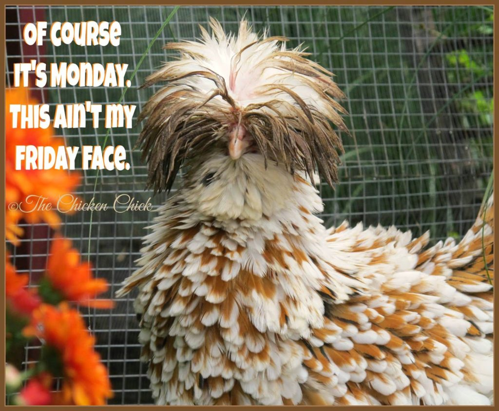 Of course it's Monday- this ain't my Friday face.