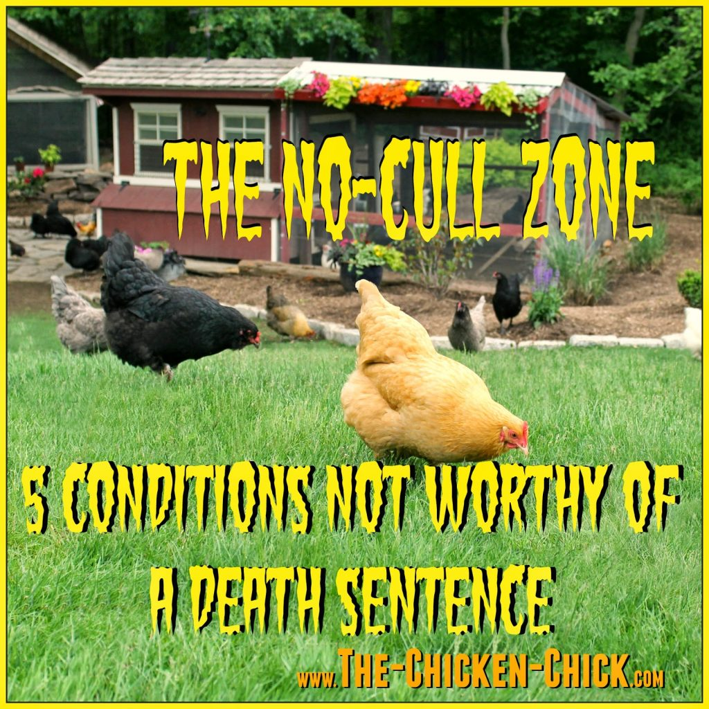 """Culling"" technically means to eliminate or remove from the flock, but the term is often used as a sanitized synonym for ""kill."" However, for most chicken-keepers, culling is considered the last resort and making a beloved pet the guest of honor at the dinner table, unthinkable."