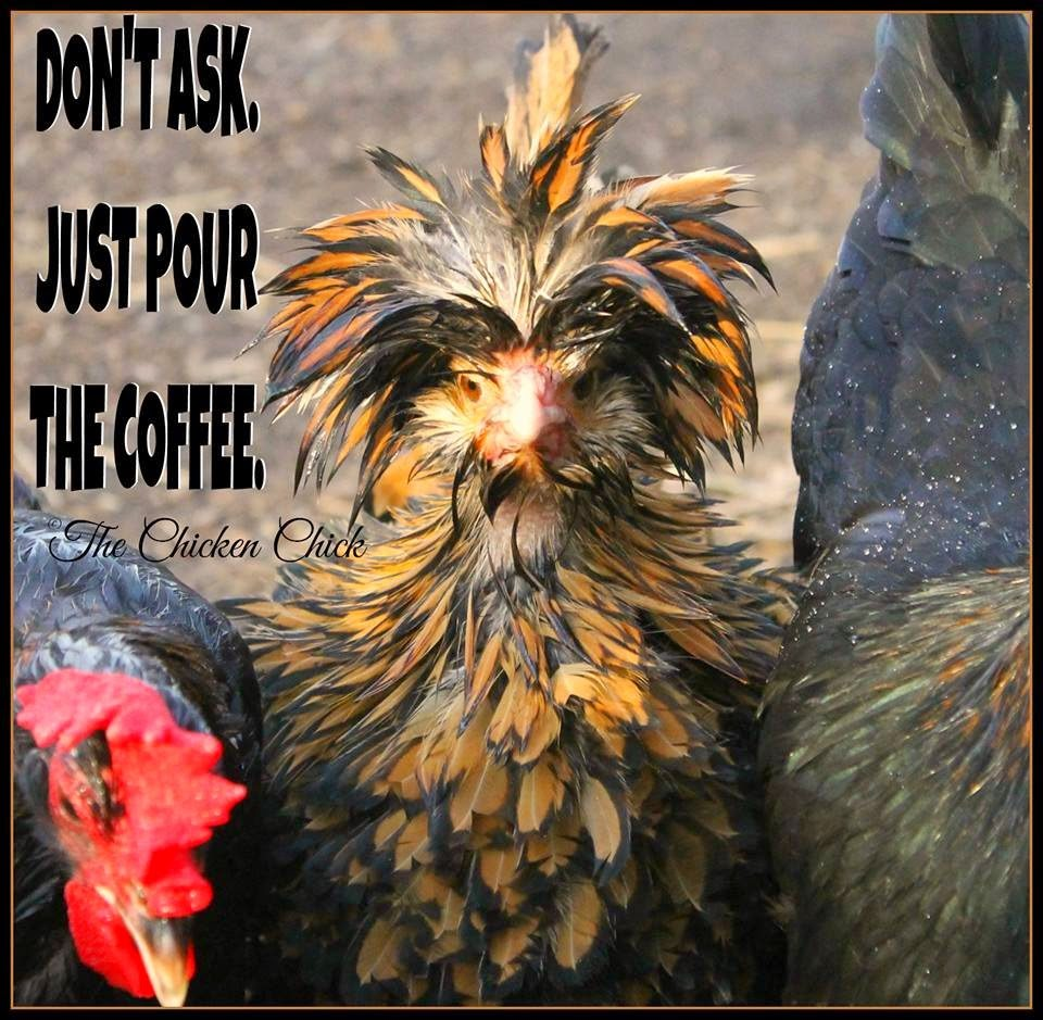Don't ask, just pour the coffee.