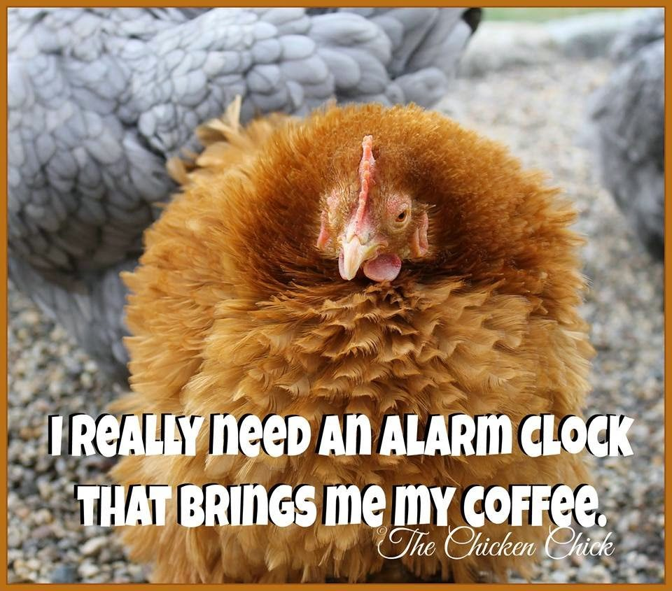 I really need an alarm clock that brings me my coffee.