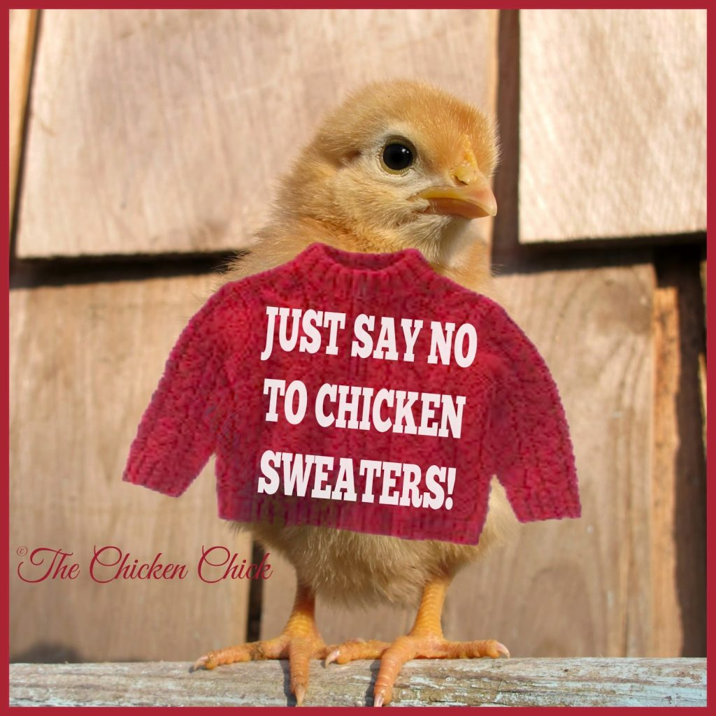 chicken sweaters just say no the chicken chick