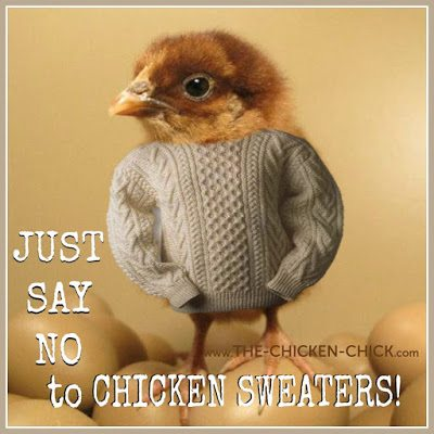 The average, backyard pet chicken does not need a sweater to keep warm. Take the cute photo and then pack it away with the Halloween costume she undoubtedly also finds irritating.