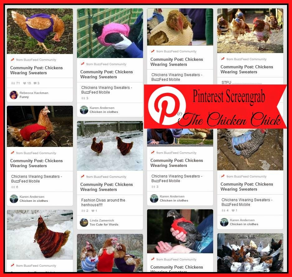 "A quick search of ""chicken sweaters"" on Pinterest turns up plenty of photos of hens in sweaters, none of which are bald or even mostly feather free, the main argument in favor of the garment."