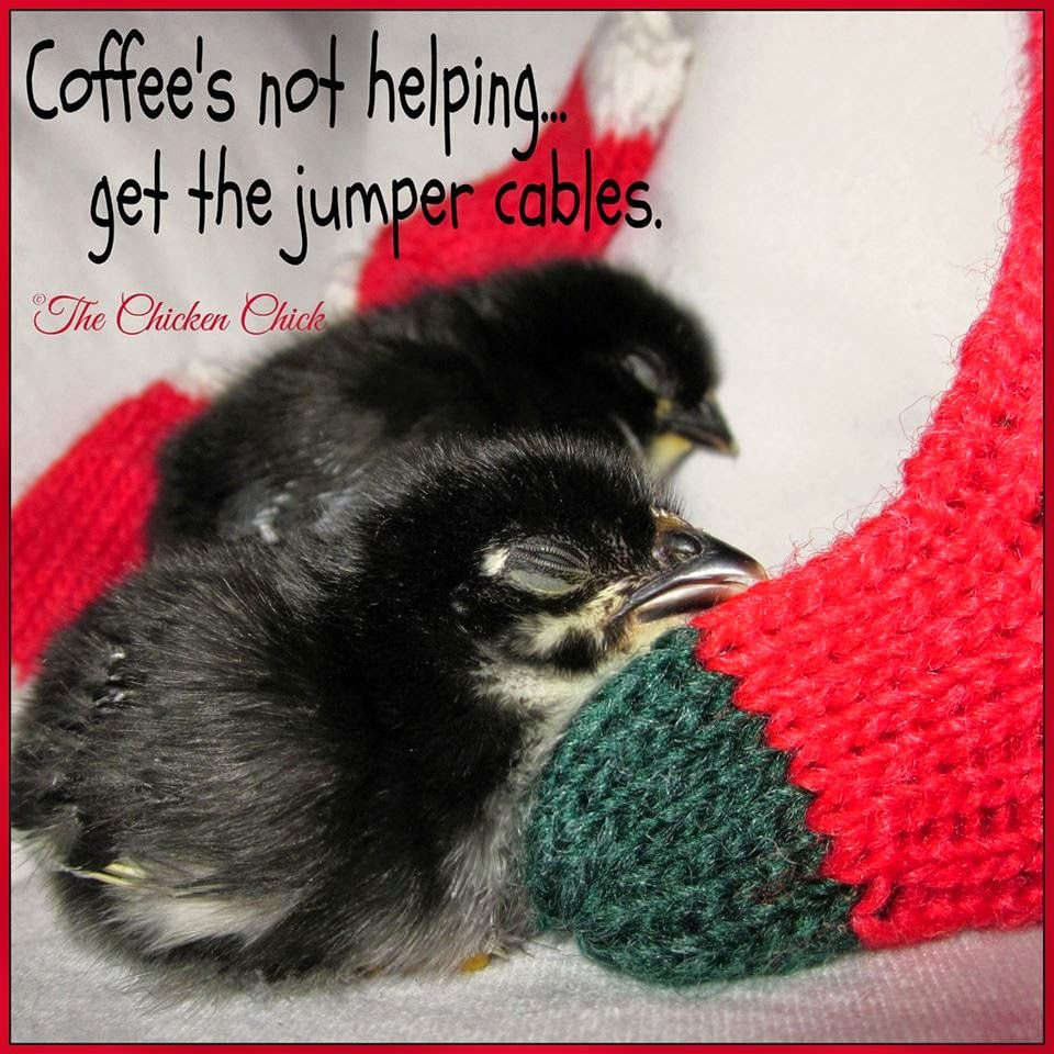 Coffee's not helping, get the jumper cables. via www.The-Chicken-Chick.com