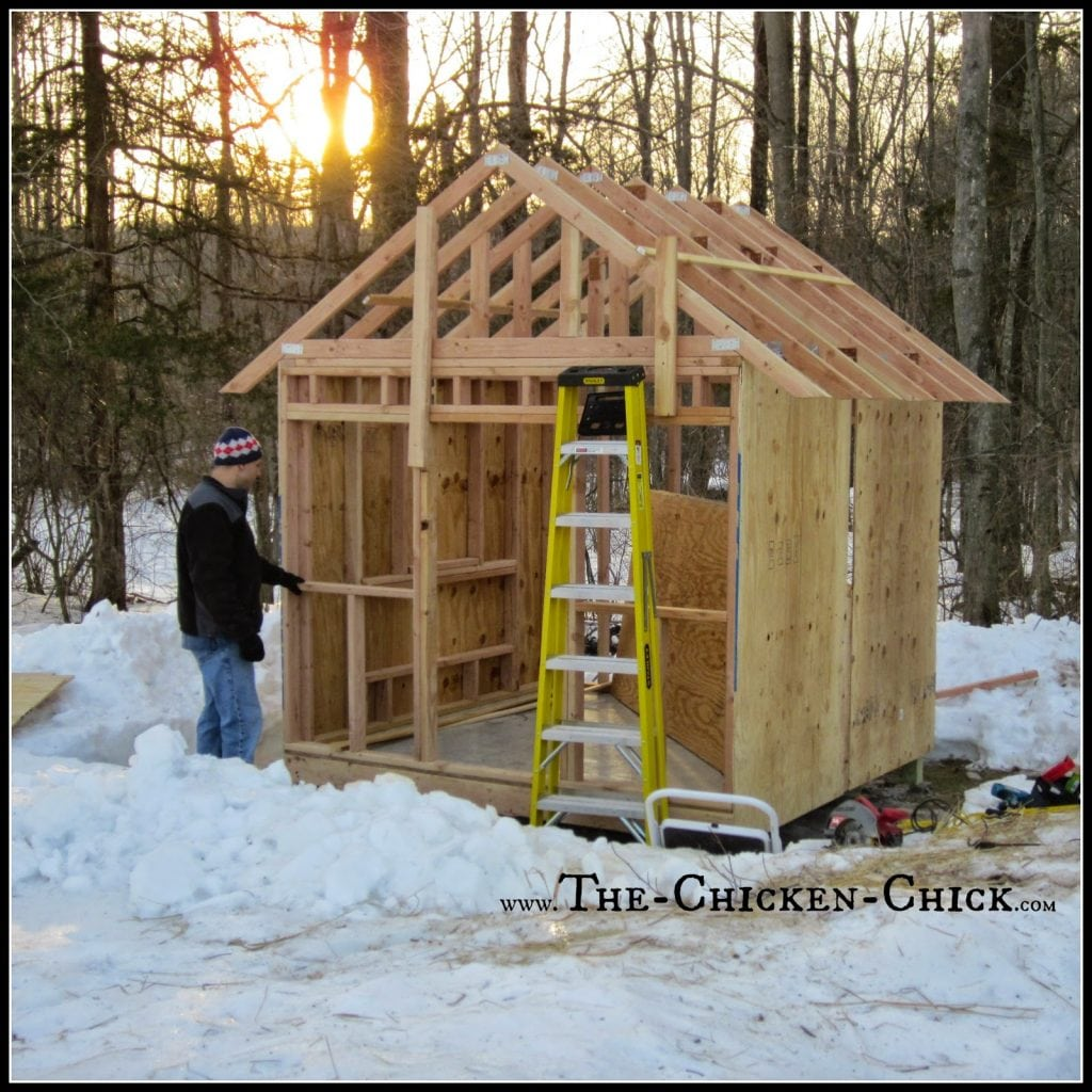 Allow at least 4 square feet per bird inside the coop. Plan a bigger coop than you think you need. Hear me now, believe me later: the coop should be twice the size of the anticipated need. Planning 6 chickens now? Build the coop for at least 12. There will be personnel additions to the flock!