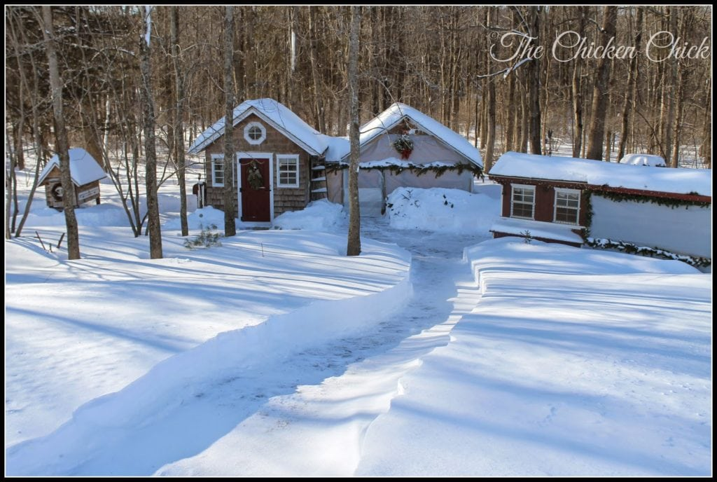 winter chicken coops in Connecticut