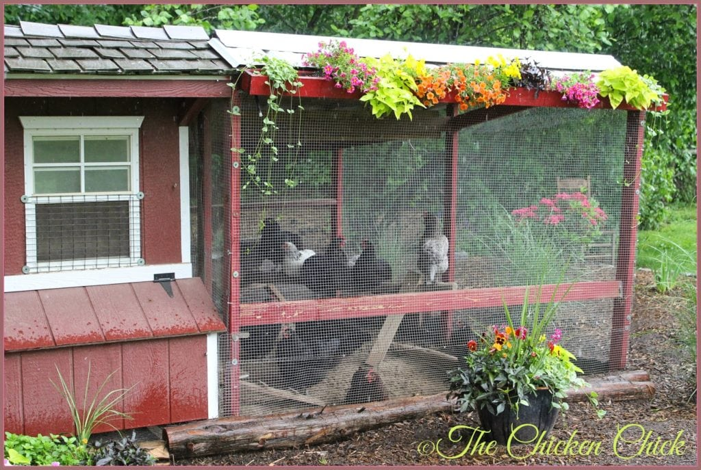 Cover the chicken run. Seriously. Covering the chicken run allows the chickens to utilize the outdoor space in inclement weather. Roofing protects the flock from aerial predators while in the run. Netting secured to the top of the run will provide raptor protection, but won't help keep the flock dry and busy in the rain and snow.