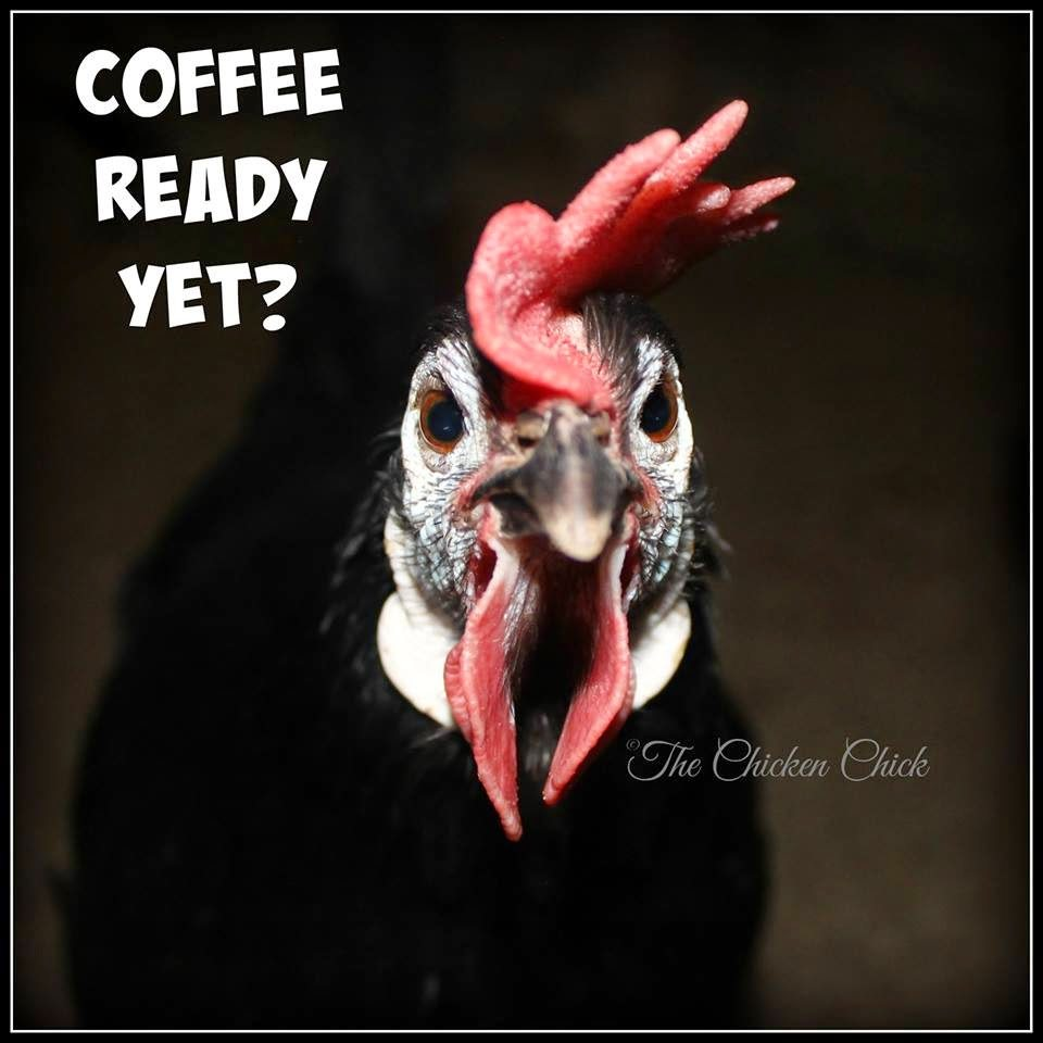 Coffee ready yet?