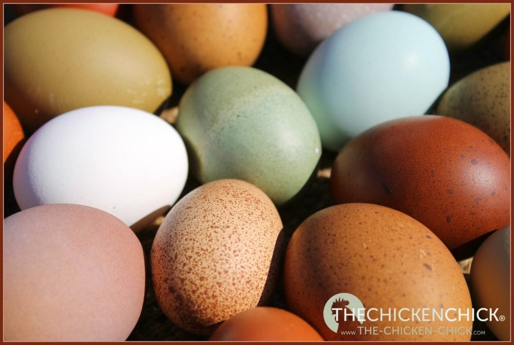 To freeze fresh eggs, simply place whole eggs, scrambled eggs, yolks or whites into an ice cube tray, freezer-safe container or freezer zip-top bag and place in freezer. Frozen eggs can be stored for up to 12 months at 0°F