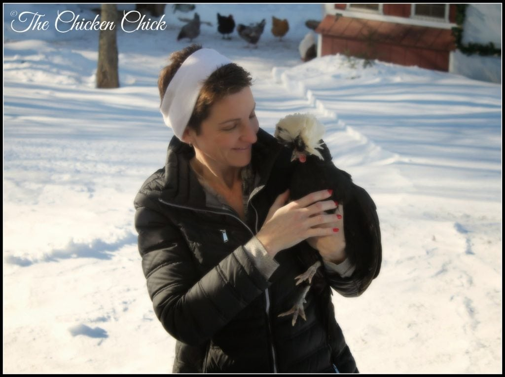 I encourage you to consider using fermented feed as a warm alternative to much less valuable foods such as oatmeal or other concoctions that may make a pretty presentation and might even taste great to you, but offer little nutritional value to chickens.