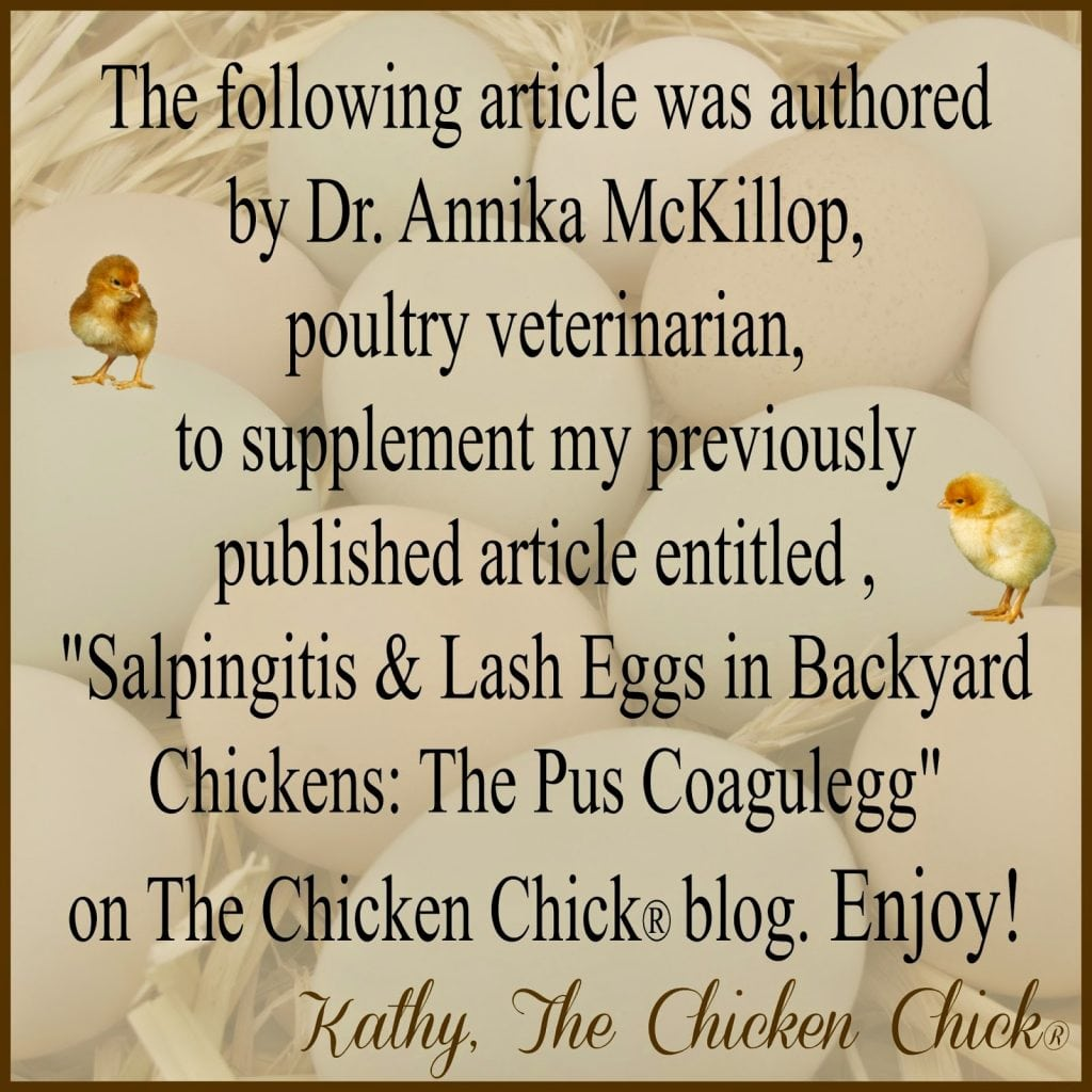 "The following article was authored by Dr. Annika McKillop, poultry veterinarian, to supplement my previously published article entitiled, Salpingitis & Lash Eggs in Backyard Chickens: The Pus Coagulegg"" on The Chicken Chick® blog. Enjoy!"