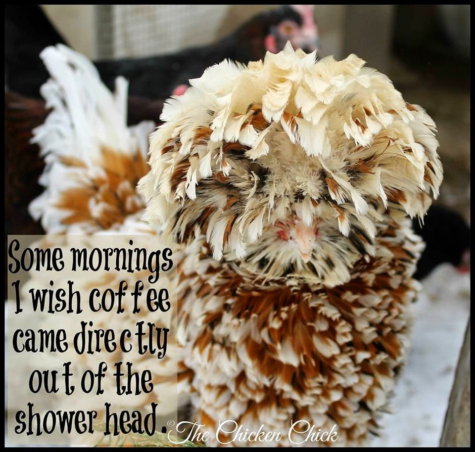 Some mornings, I wish coffee came directly out of the shower head.
