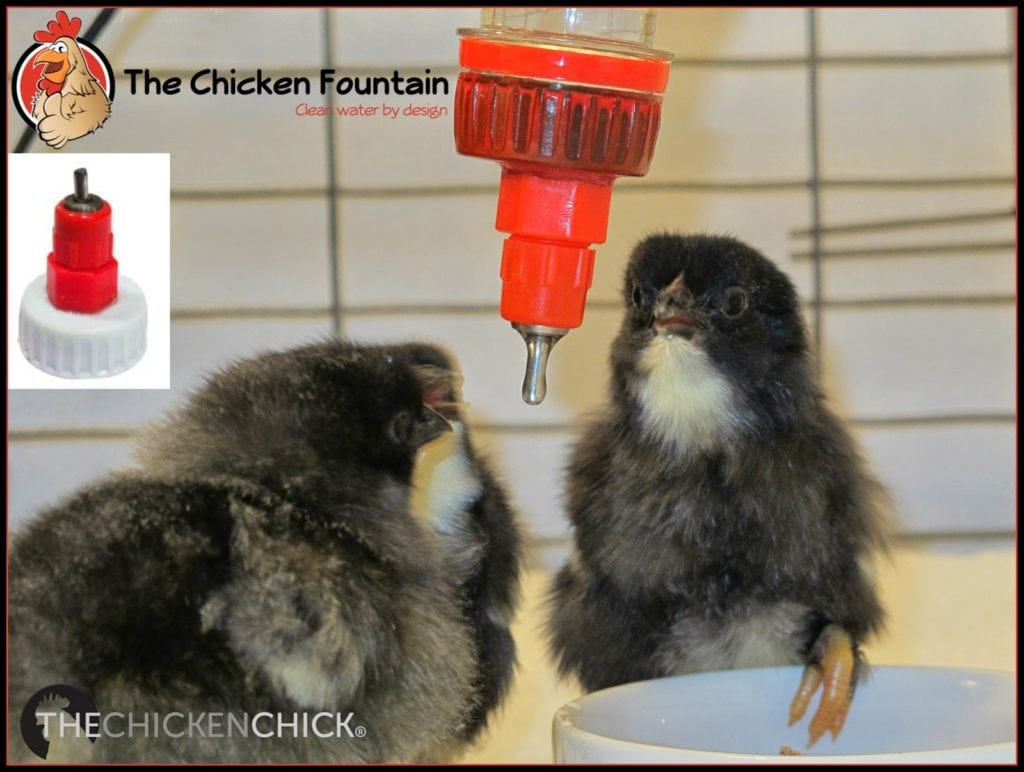 The Chicken Fountain and The Chicken Chick celebrate National Poultry Day March 19th with a Giveaway-palooza