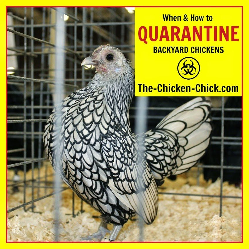 Bird flu, Limit the risk. Properly quarantine newly acquired birds. Better yet, don't bring new bird into the flock at all, particularly from a swap meet, auction or a breeder that is not NPIP certified.