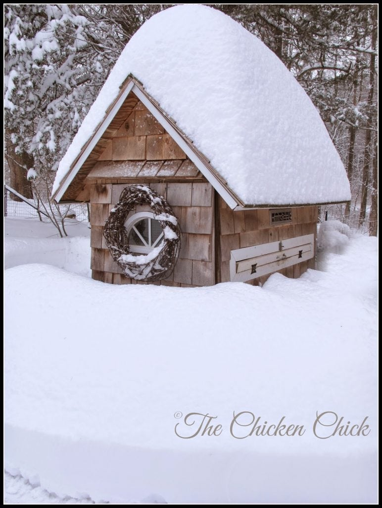 Quail coop buried in snow.