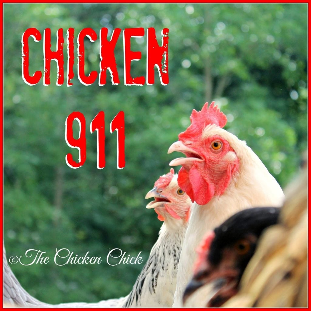 Most backyard chicken keepers have no access to a veterinarian willing or able to treat an injured chicken, so when a pet chicken is hurt, self-help is the only recourse. Some of the following basic first aid care measures for injured chickens may be life-saving when a vet visit is not an option.