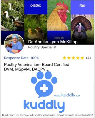 The Kuddly app provides access to verified veterinarians around the world for a nominal fee. Poultry Veterinarian Dr. Annika McKillop is a participating poultry specialist on the Kuddly app.