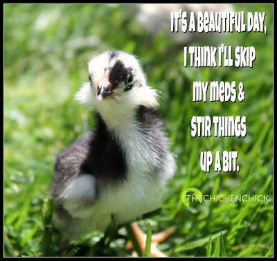 Gz The Chicken Chick 174