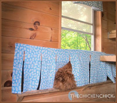 NEST BOX CURTAINS: material covering the entrances to nest boxes that provide privacy for laying hens and broody hens, discourage vent-picking and egg-eating and are too stinkin' cute not to hang in a well-appointed chicken coop.