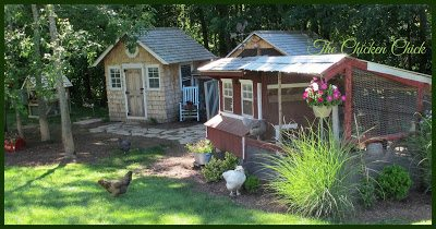 COOP: a housing unit for chickens.