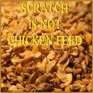 SCRATCH: a chicken treat consisting primarily of cracked corn and a number of grains. It is a source of energy, (think: carbs) but is not a good source of vitamins, minerals or protein. In cold weather, chickens expend extra energy to keep warm and a small amount of scratch just before dusk is a decent source of energy, but too much can contribute to obesity and obesity-related deaths.