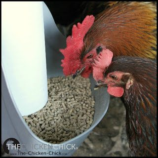 BILL-OUT: using the beak to scoop feed out of a feeder onto the floor.