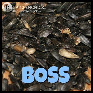 BOSS: abbreviation for black oil sunflower seeds